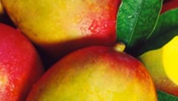 Al Azraq Fruits Company W L L ,Fruits and Vegetables